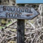 Sign saying squirrel hide
